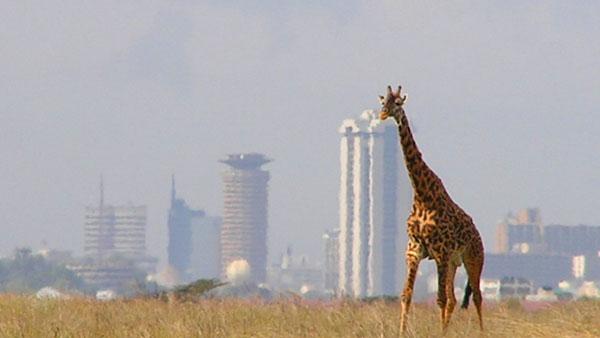 Cambridge to Nairobi
